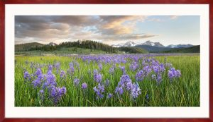 Sawtooth Mountains wildflower meadows