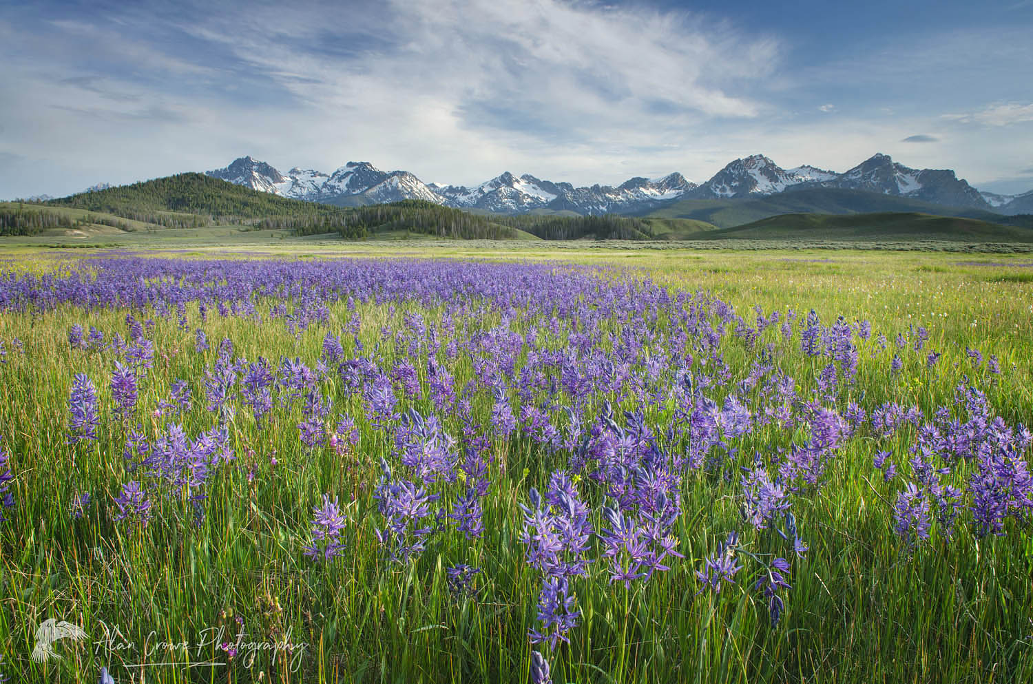 Camas meadows Sawtooth Mountains Idaho