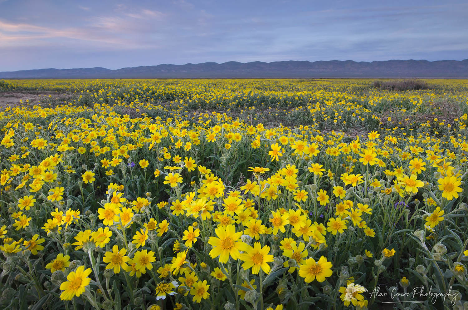 Carrizo Plains National Monument, California
