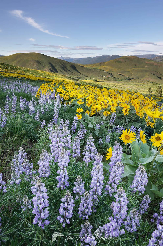 Methow Valley Wildflowers