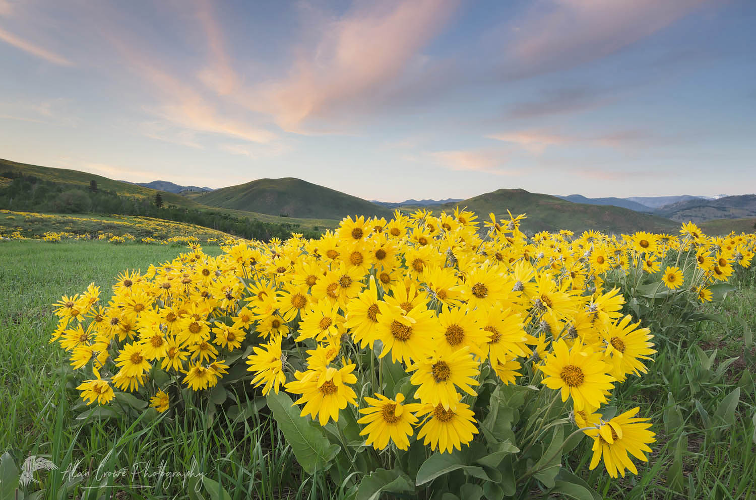 Methow Valley Wildflowers