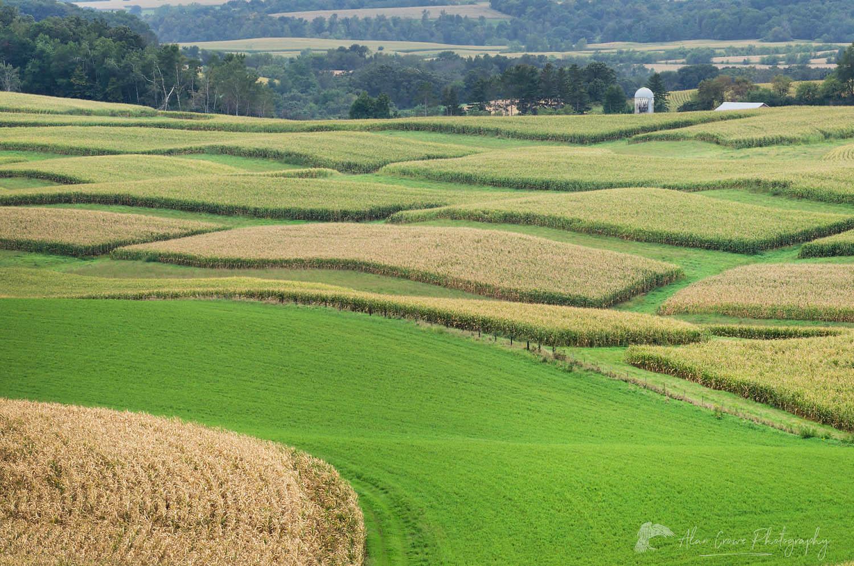 Cornfields Southeast Minnesota
