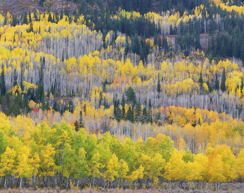 Wasatch Mountains Fall Foliage