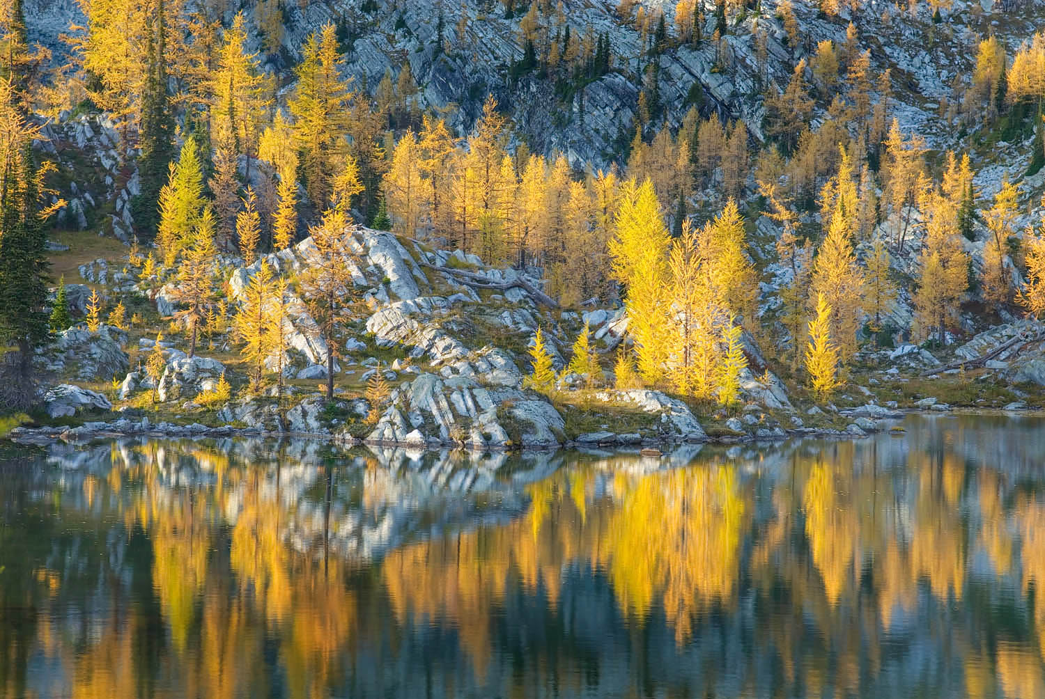 Larches Purcell Mountains