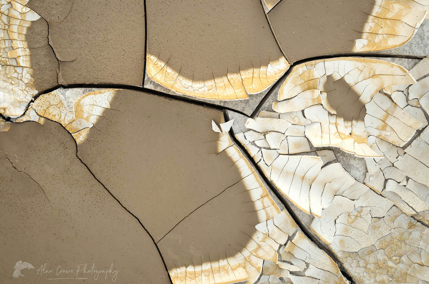 Cracked mud patterns