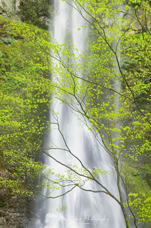 Double Falls Silver Falls State Park, Oregon