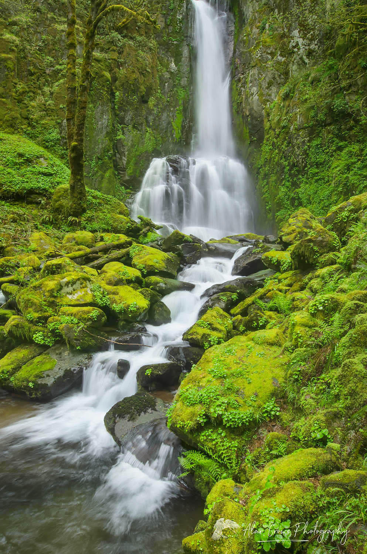 Lower Kentucky Falls Oregon