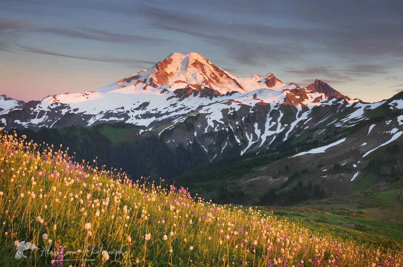 Mount Baker wildflowers North Cascades