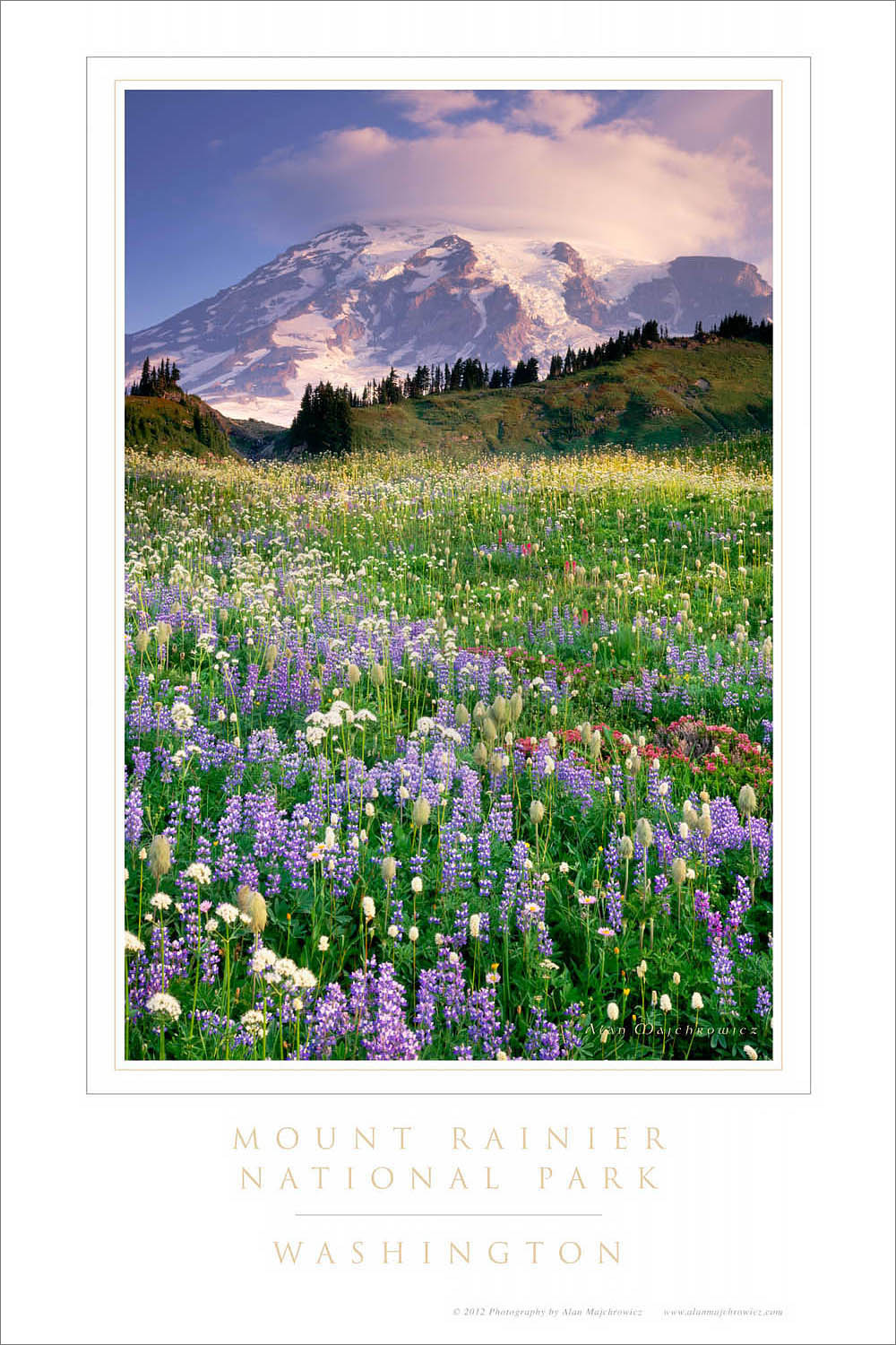 Mount Rainer Wildflowers