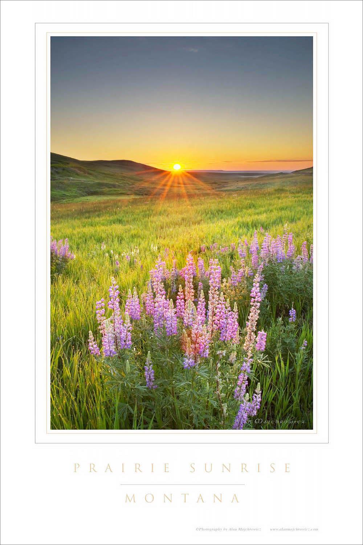 Prairie Sunrise Montana