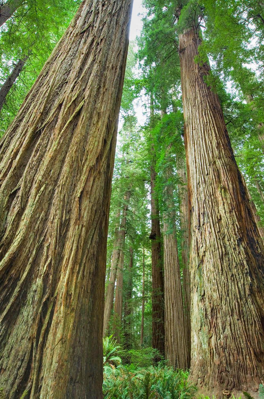 Jedidiah Smith Redwoods State Park California