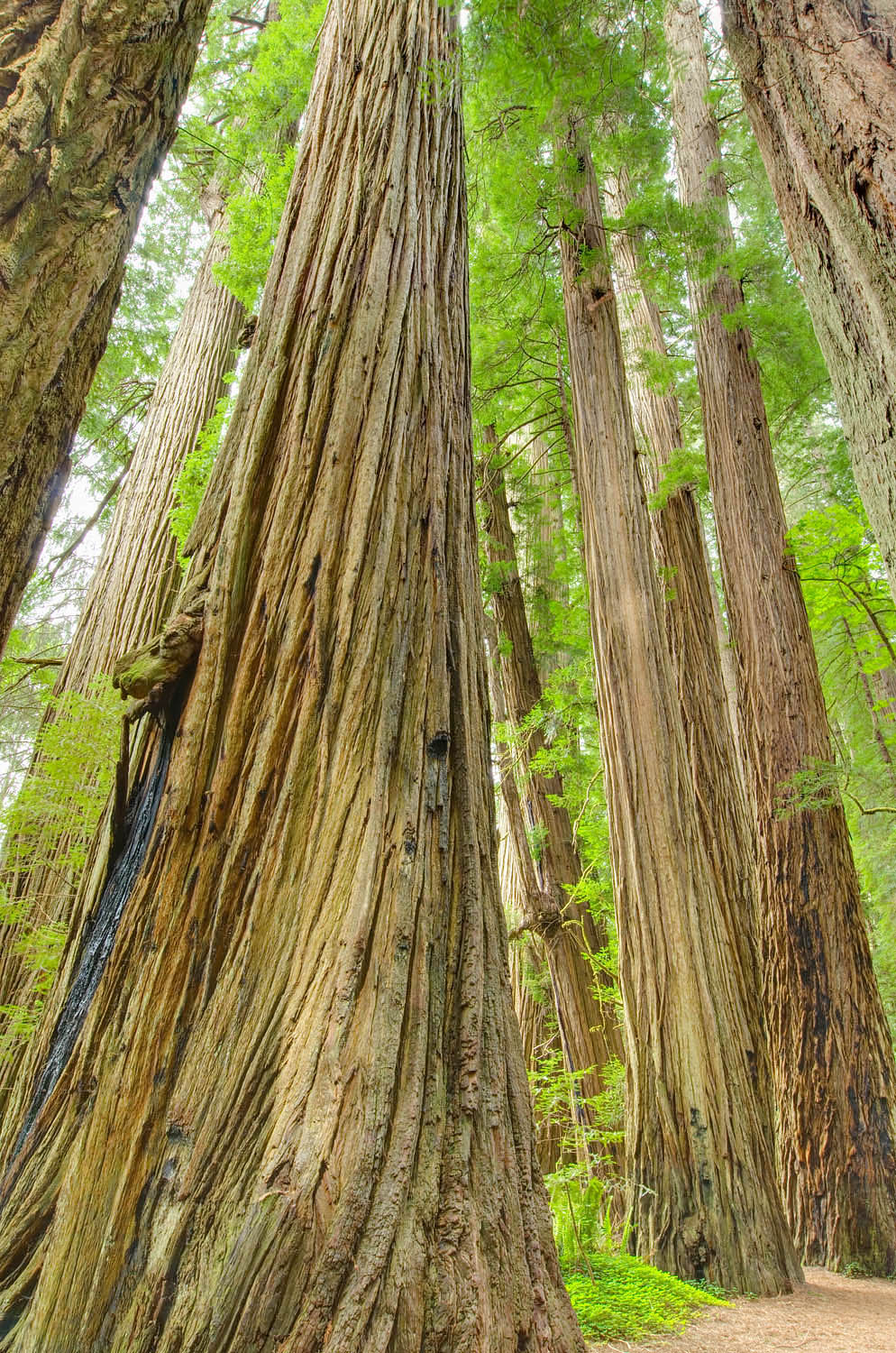 Jedidiah Smith Redwoods State Park California