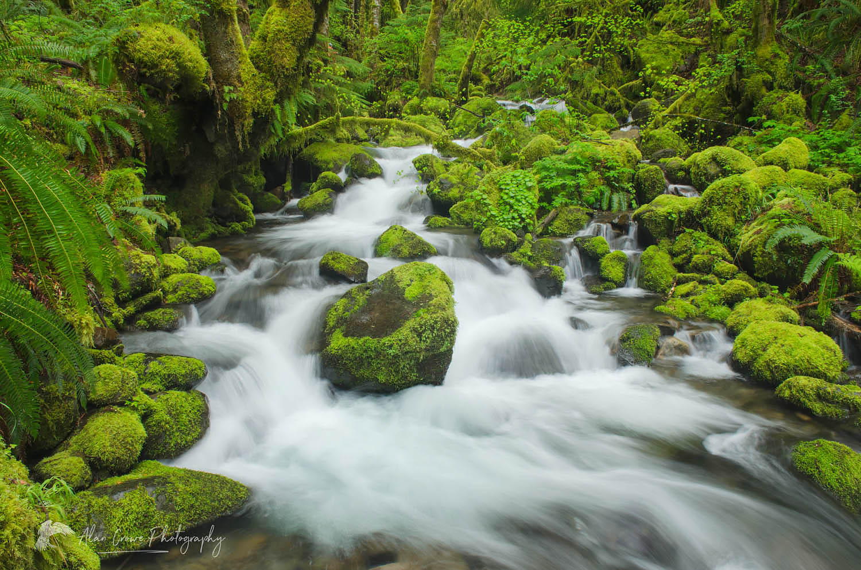 Ruckel Creek Oregon