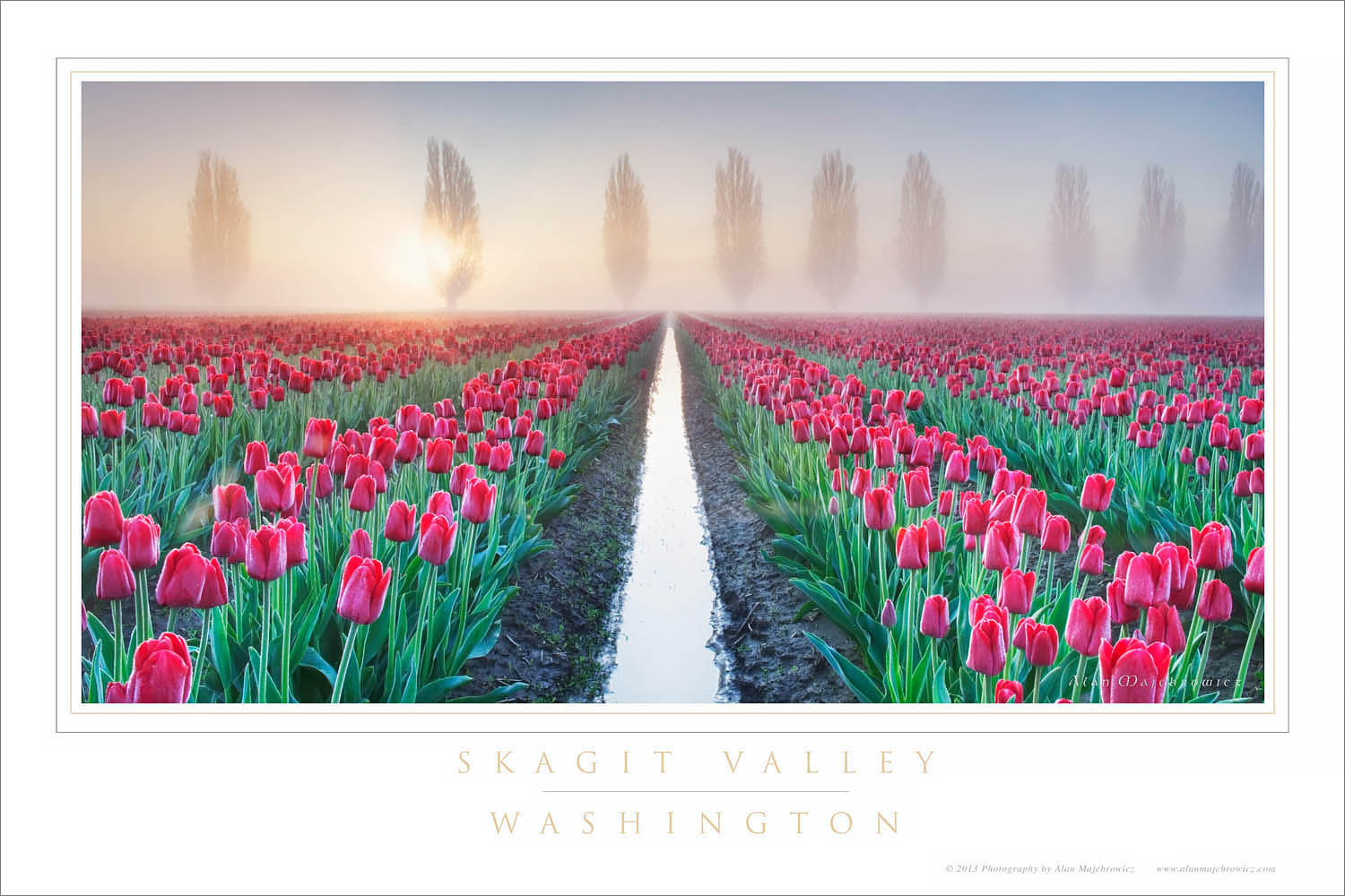 Skagit Valley Tulips Washington