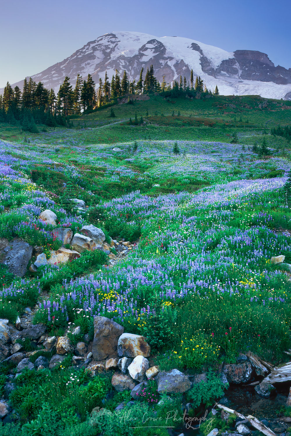 Mount Rainier, Paradise Meadows Wildflowers