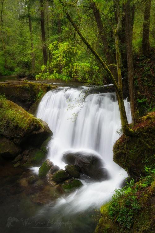 Whatcom Falls Bellingham Washington Photo Highlights 2020