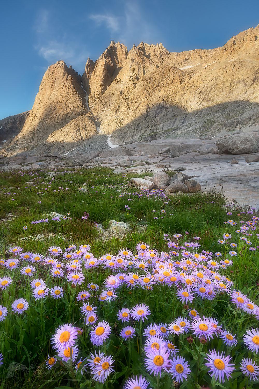 Upper Titcomb Basin wildflowers Wind River Range Wyoming